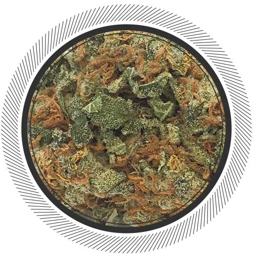 Big-Bud-Online-Dispensary-WhitePalm-01