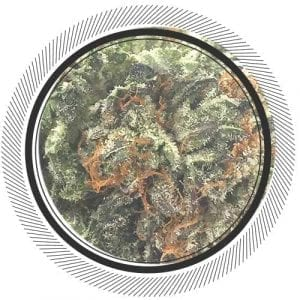 Buy Granddaddy Purple Online at WhitePalm, the best online dispensary