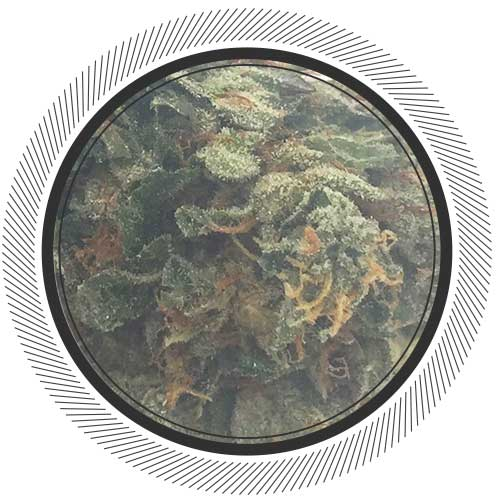 The best weed deals in Canada can be found at WhitePalm | Pink Kush