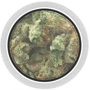 Buy White Widow online at WhitePalm | Order Weed Online