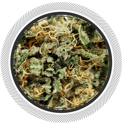 Buy White Widow online at WhitePalm   Order Weed Online
