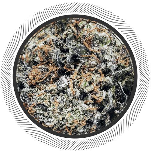buy godzilla strain online canada, nug shot