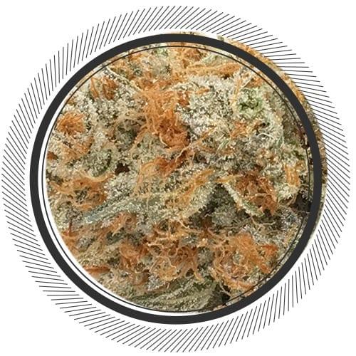 Order Shishkaberry strain online Canada