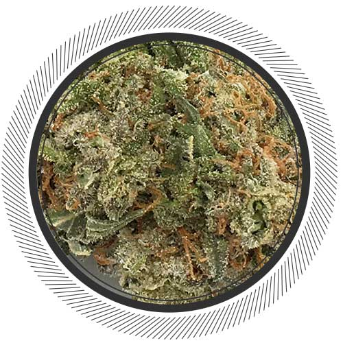 Order Strawberry Cheesecake strain online