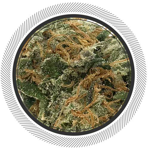 Order Blueberry Headband online