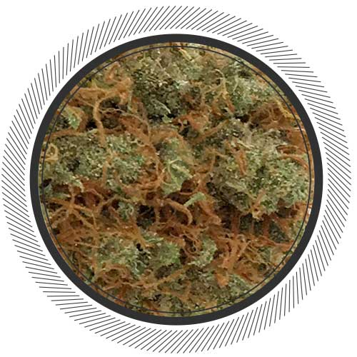 Order Vancity Green Congolese Strain Online