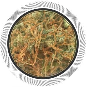 Order high cbd strain online