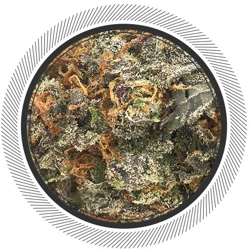 Order Hashberry strain online