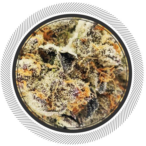 buy Girl Scout Cookies strain online