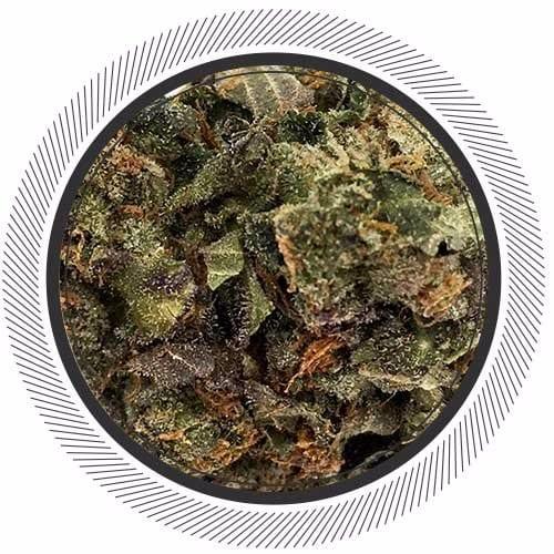 Order Afgooey Strain online, best weed deals in Canada