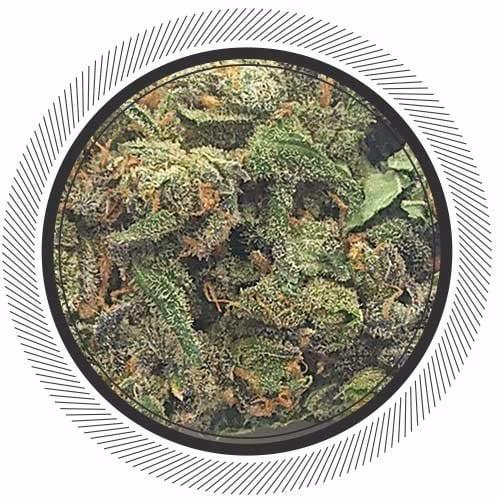 Order Blueberry Kush Online
