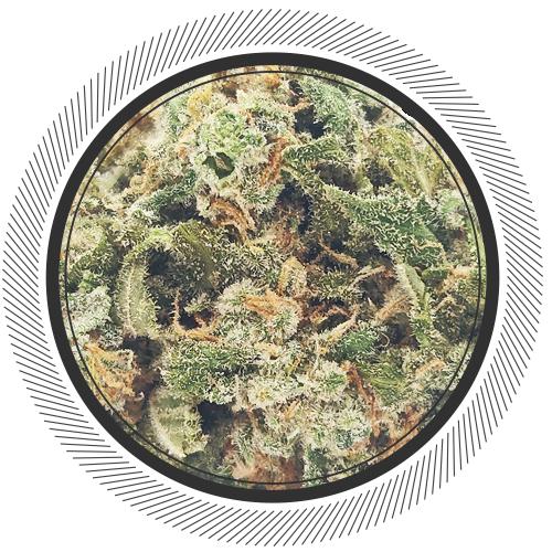 buy Cookie Monster strain online