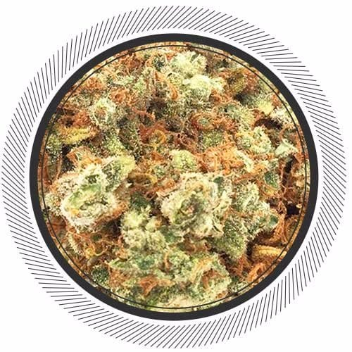 Order The Big Cheese Strain online