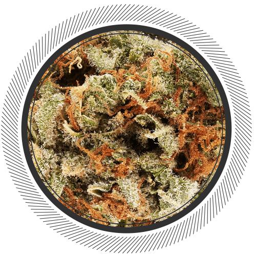 buy tangilope strain online Canada