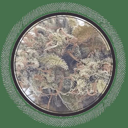 Order Gorilla Glue #4 strain online