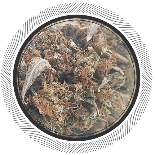 bruce banner strain order best weed online product