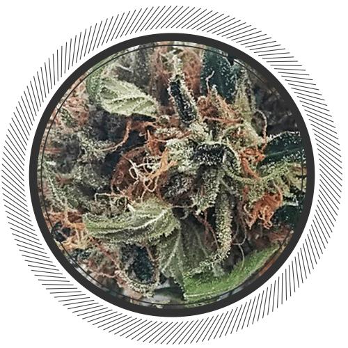 Order Harmony strain online