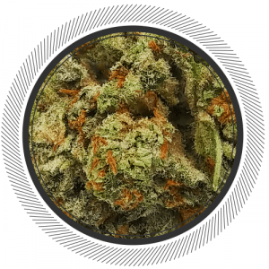 Order Orange Crush strain online