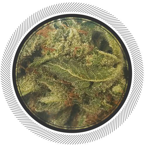Order Platinum Candy strain online