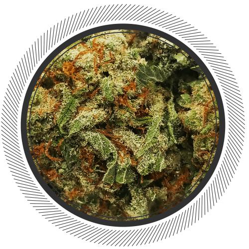Order Mimosa strain online