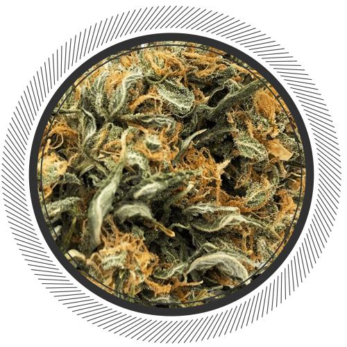 Order premium Mango Kush strain online Canada
