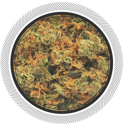 citrique strain online canada