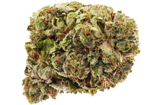 Purple Candy strain picture