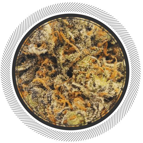 Order Purple Space Cookies strain online Canada