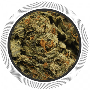 Order Apricot Kush weed deal online Canada