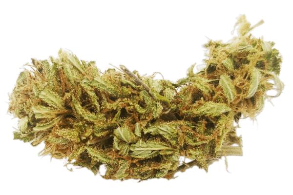 organic cannatonic strain