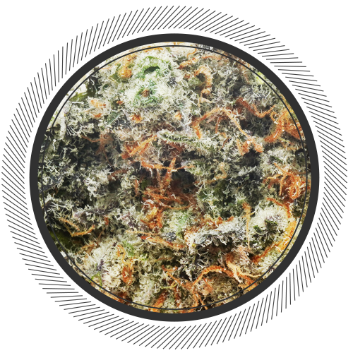 buy Mint Chocolate Chip strain online Canada