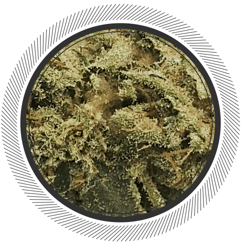 Organic Mint Chocolate Chip strain online Canada