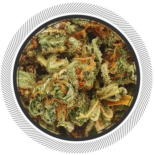 buy Orange Crush strain online