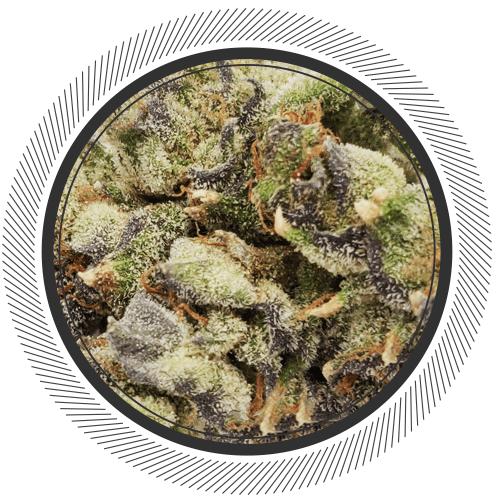 Cookies Gelato strain online Canada, #2