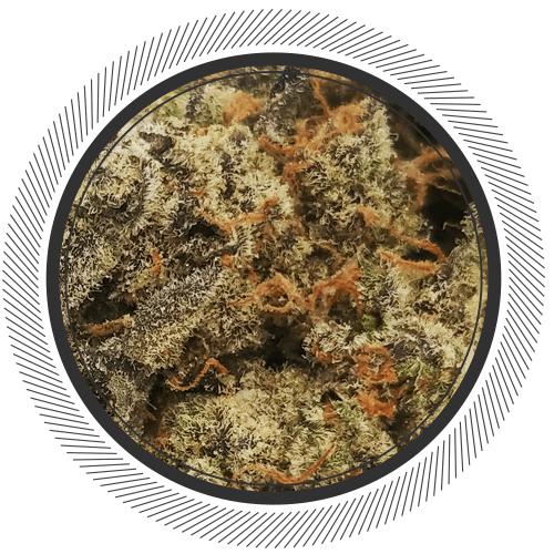 buy Gelato strain online Canada