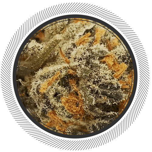 Review Meat Breath Strain Online