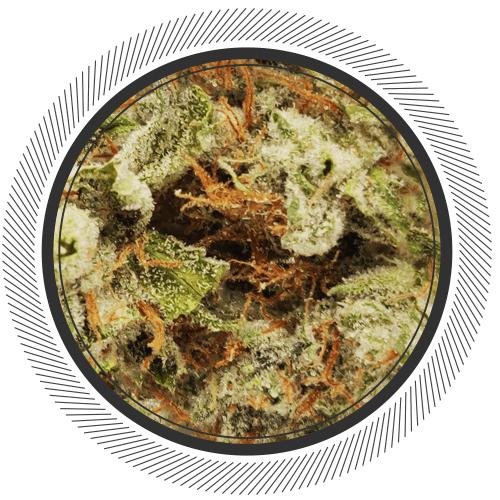 order sour tahoe strain online Canada