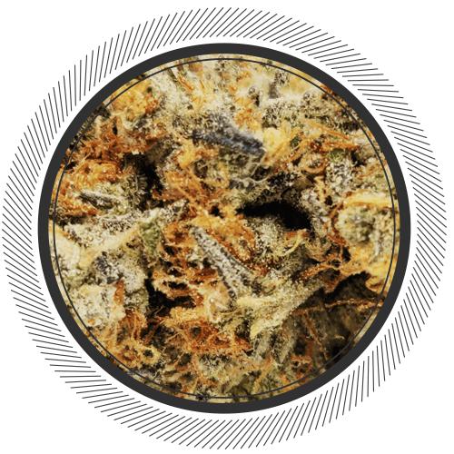 garlic breath strain by thugpug