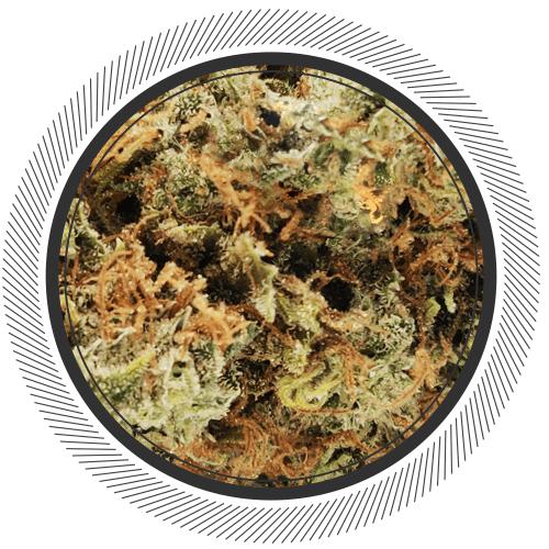buy g13 strain online canada