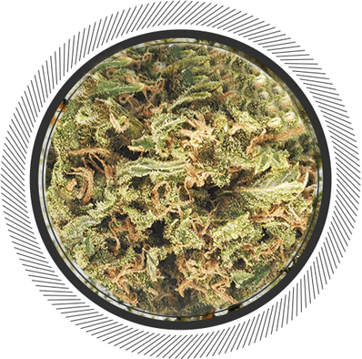 buy Orange Cookies strain online Canada, budget buds