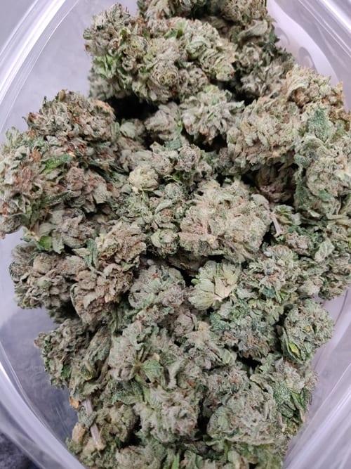 Black Kush strain picture
