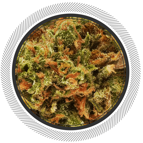buy Critical Mass 2.0 strain online Canada
