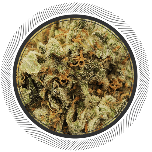 buy Purple Punch strain online Canada