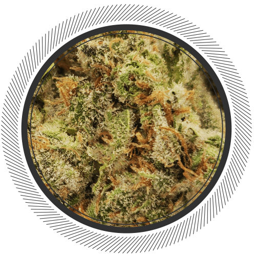 buy Sour Tangie strain online Canada