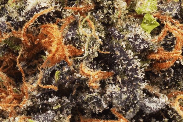DJ Short Blueberry strain close up shot