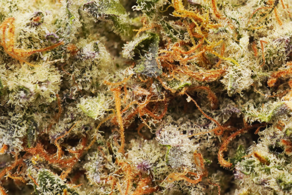Donkey Butter strain picture