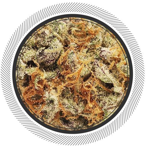 buy Slurrican strain online Canada