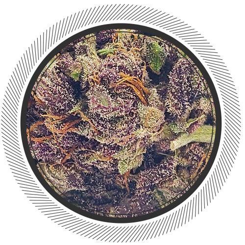 buy Primal Purple strain online Canada