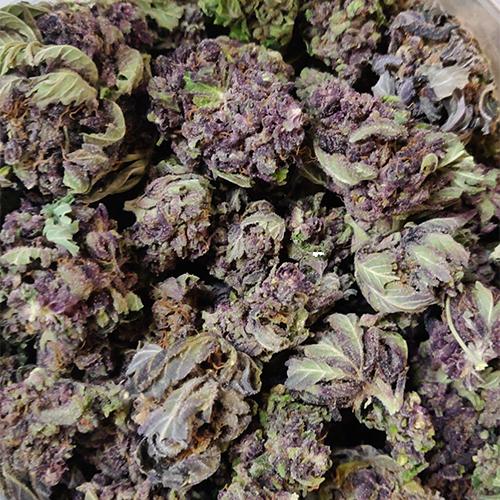 Primal Purple strain picture