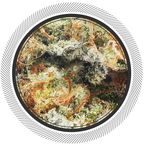 buy Organic Garlic Cookies strain online